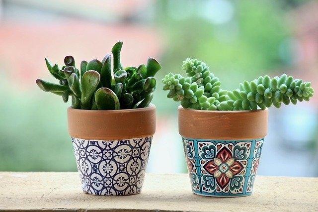 sobne rastline